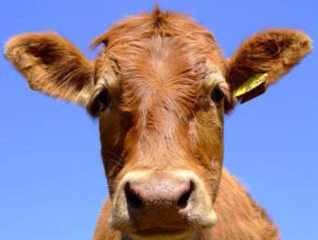 Down under: Rohstoffkonzerne greifen nach Farmland