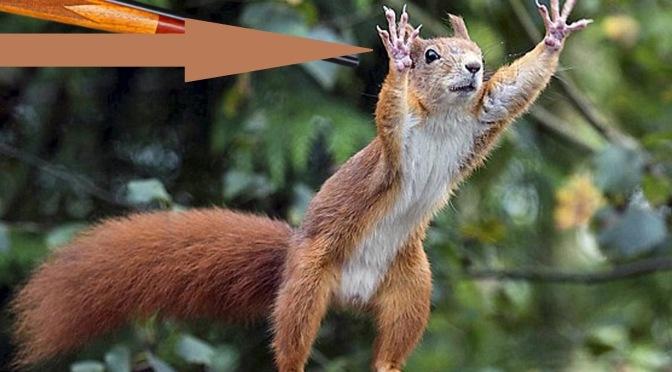 Geldschöpfung und kein Ende: Robinson und die Eichhörnchen